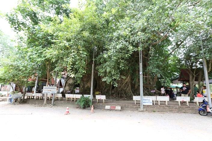 曼谷近郊旅‧樹中廟 求子廟‧泰拳公園 (22).JPG