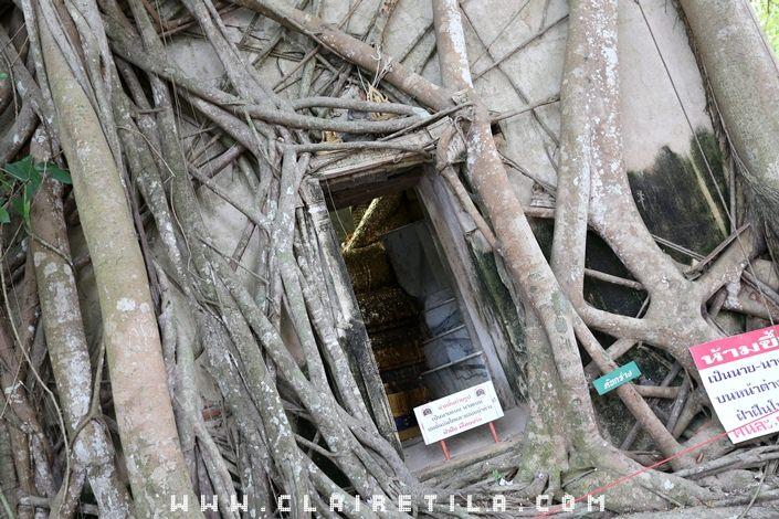 曼谷近郊旅‧樹中廟 求子廟‧泰拳公園 (8).JPG